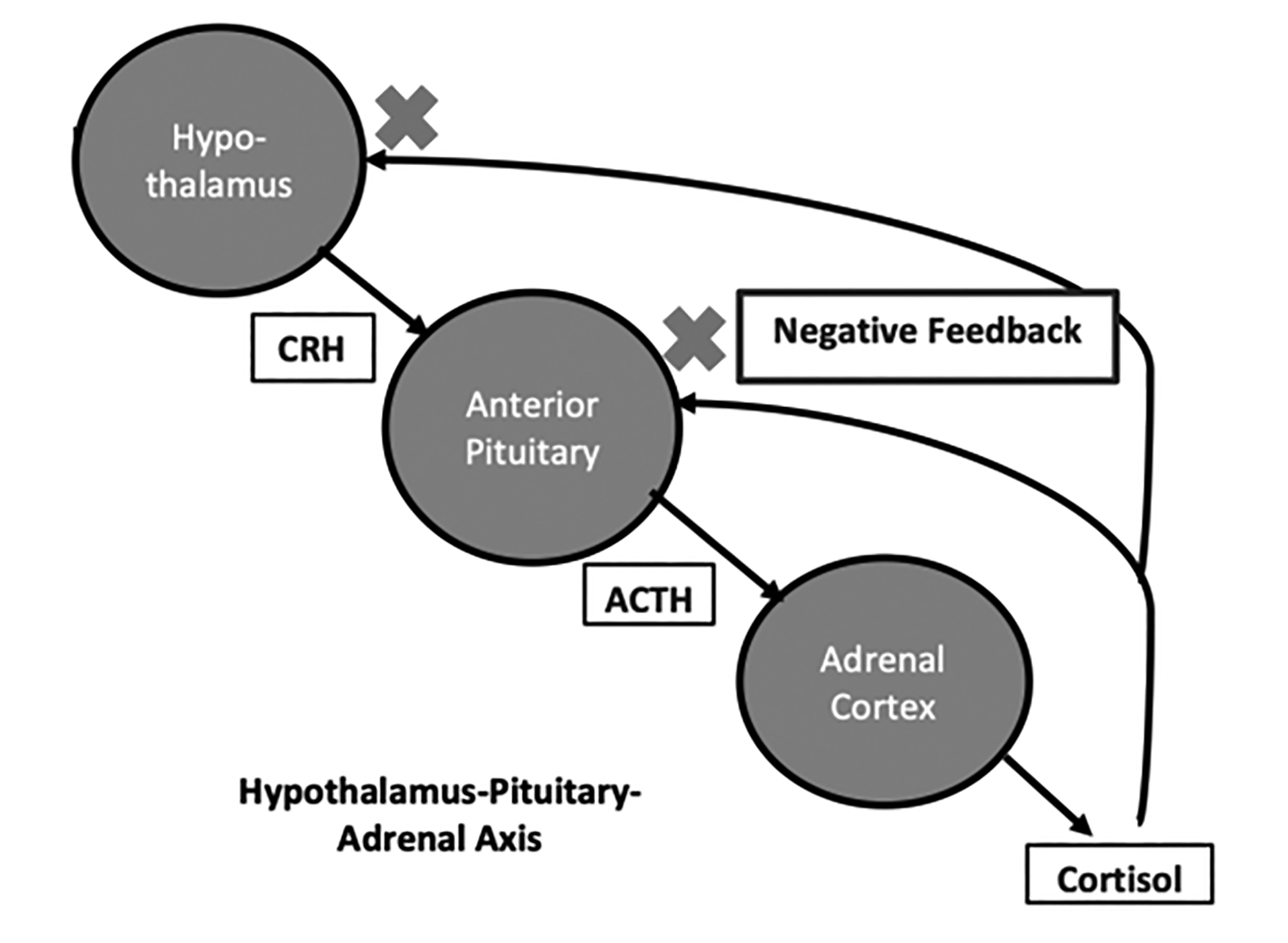 Hypothalamus-Pituitary-Adrenal Axis