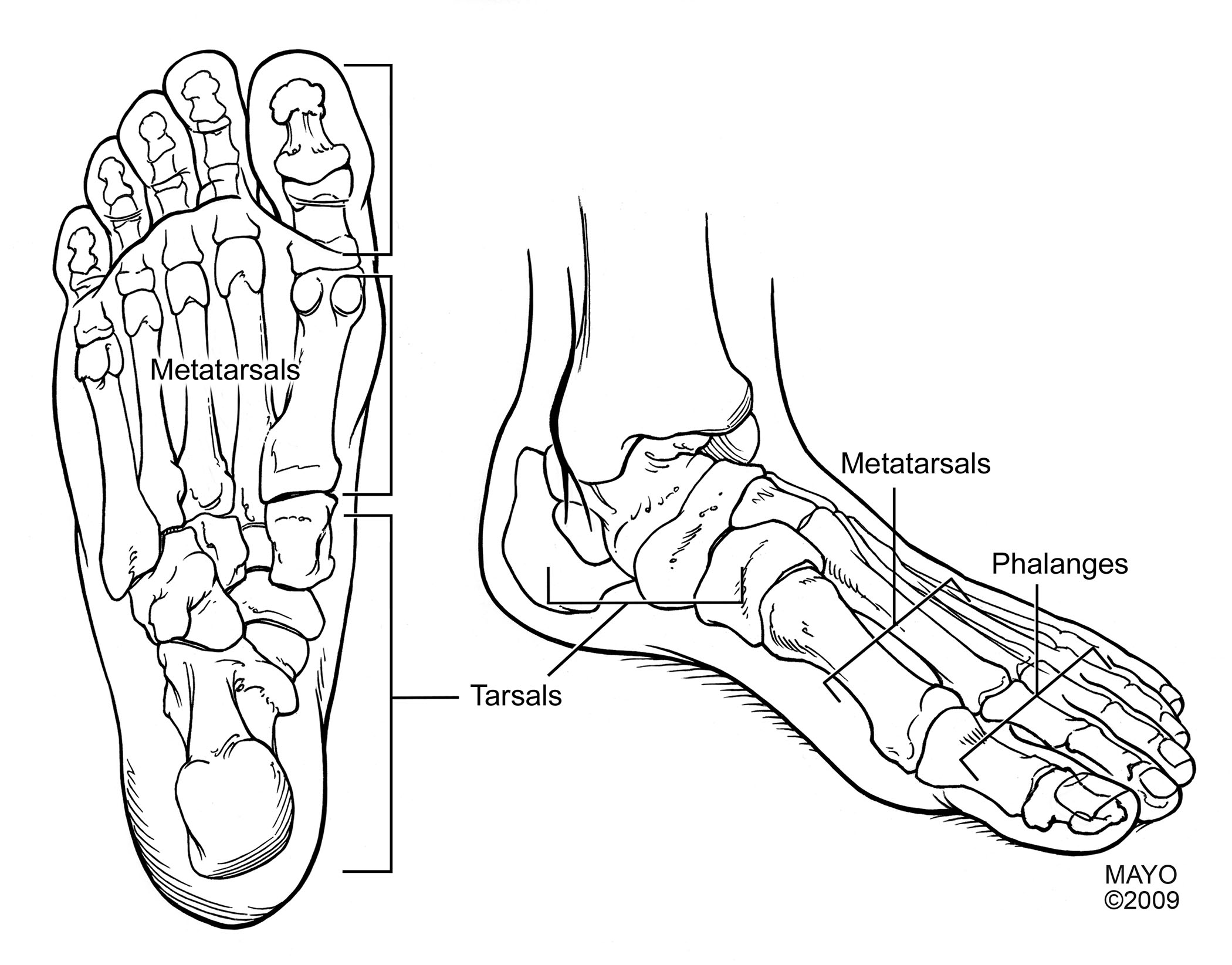 Pediatric Sports-Related Injuries of the Lower Extremity: Ankle ...