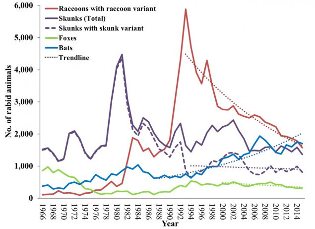since 1998, more than 50% of skunks were infected with a presumed raccoon rabies  virus variant