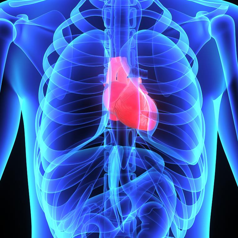 Heart-valve1